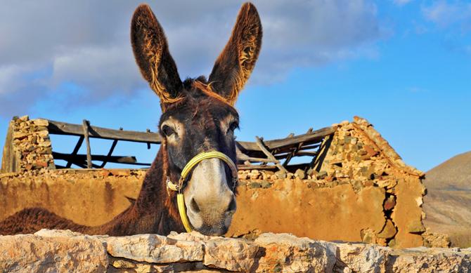 Palm Sunday Donkey a Donkey on Palm Sunday