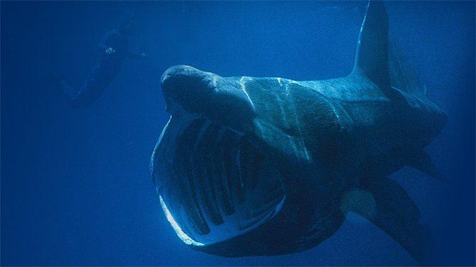 Gulp! Why it Matters that Jonah Got Swallowed